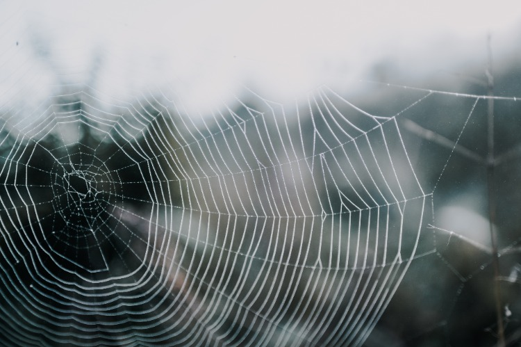 Spider-web-photo