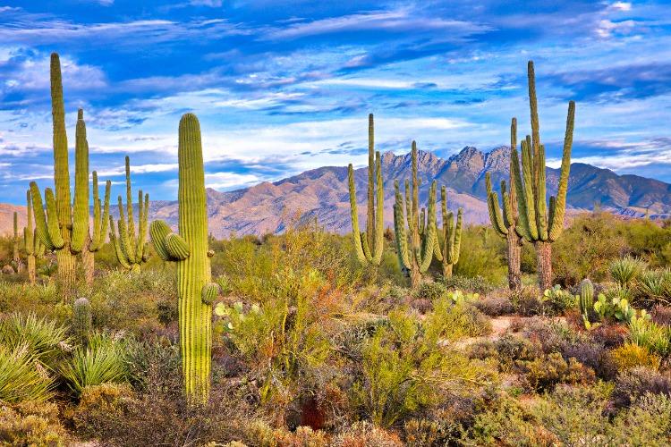 Cool-Cactus-Arizona