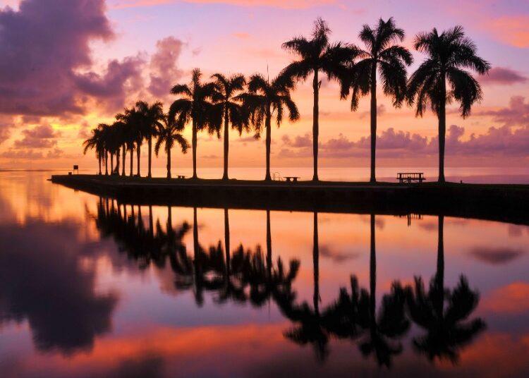 Palm-Trees-Florida-Sunset