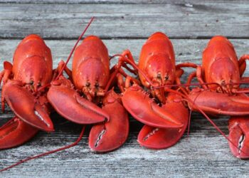 Four-Cooked-Lobsters