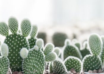 Cactus-Arizona